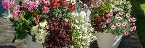 Gärtnerei Rohse – Pflanzgefäße & Arrangements