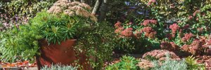 Gärtnerei Rohse – Pflanzservice